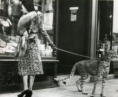 i'm going to buy myself a cheetah