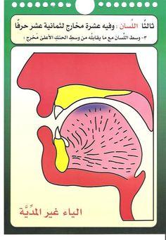 مخارج الحروف العربية للدكتور/أيمن سويد - الصفحة 2