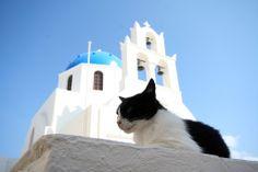 """I'm picture frame perfect."" -- Cat in Santorini"