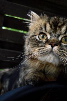 Hello Lilou
