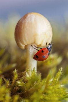 "Lady bug - ""No Pin Limits"" group board: www.pinterest.com/pinbycolor/no-pin-limits"