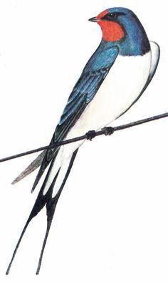 ласточка Birds, Animals, Journaling, Animales, Animaux, Caro Diario, Bird, Animais, Journaling File System