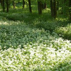 Sono nata e cresciuta vicino al Parco di Monza, e per me primavera era cominciare a sentire nell'aria il profumo dell'erba cipollina (lo so, non si chiama così). Il mio momento di gioia è stato attraversare il Parco in macchina invece di fare la solita strada immersa nel traffico. Ho scattato delle foto mentre ero ferma, ma ho deciso di usarne una regalatami dell'amico Giacomo, in onore dell'amicizia di lunga data con la mia famiglia!!!  #100daysofhappiness #day18 #ParcoDiMonza #primavera…