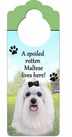 Maltese Dog Door Knob Hanger- haha we need this for penny!