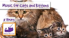8 HOURS of Relaxing Music for Cats and Kittens!  Published on Jun 2, 2015 This 8 hour compilation is perfect for cats of any size, age or breed! The extra long compilation is perfect for when your cat is at home for long periods on its own, to relax and soothe them while you're away.