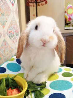 Popular Rabbit Breeds that will fit perfectly in your Heart and Home
