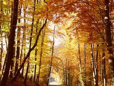 Nice! Herbst 2015