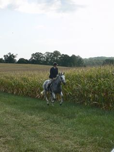 Galloping by the corn field, yes!  I can smell the corn and feel the wind in my face!