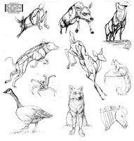 Animal Sketches, Resources for Art Students / Art School Portfolio Work at CAPI ::: Create Art Portfolio Ideas at milliande.com , How to Draw Animals
