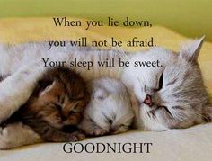 Cute good night images with Quotes Good Night Prayer Images, Good Night Quotes Images, New Good Night Images, Night Love Quotes, Beautiful Good Night Images, Good Night Messages, Good Night Wishes, Night Pictures, Morning Quotes