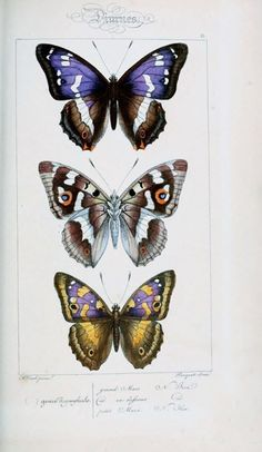 petitcabinetdecuriosites:   Biodiversity Heritage Library You know, BHL isn't the only one that has a new portal launch. BHL-Europe also wen...
