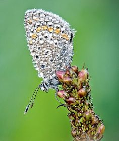 Just Beautiful!  Unique picture of an insect with early morning dew featured in amazingdata.com.