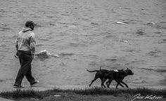 """""""Paseando los perros"""" de Jose Kalinski - Argentina - Abril/2016"""