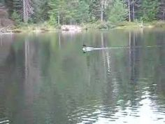 LOVE the sound of a Loon calling out across a lake ....there is something so…