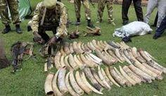 4 Poachers Nabbed In Embu - Citizen News