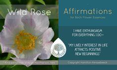 Morning Affirmations, Positive Affirmations, Bach Flowers, Healing Herbs, Emotional Healing, Negative Emotions, Medicinal Plants, Flower Cards, Flower Power