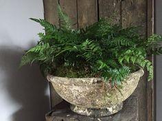 Brynxz vintage earth bowl met varens