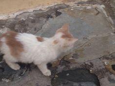 In Griechenland leben tausende von abgemagerten Katzen auf der Straße!