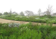 Oudolf ~ A 14 acre private garden, Nantucket Island, Massachusetts, USA                                                           _/////_
