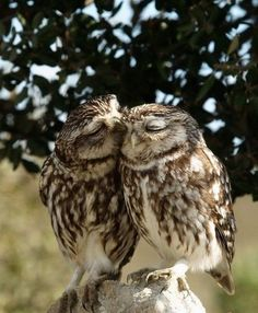 I have an owl obsession