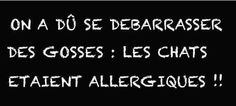 Chats allergiques !!!!!!
