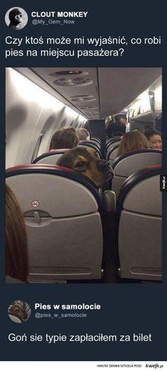 Jest po prostu psem z pieniędzmi i pogódź się z tym Dogs On Planes, Very Funny Memes, Explain Why, Really Funny, Best Dogs, Haha, Jokes, Humor, Amazing Dogs