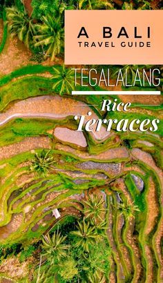 Our Bali travel guide to the Tegalalang Rice Terraces (Tegallalang Rice Terraces), with tips and tricks to enjoy the famous jungle rice paddies in Ubud, Indonesia without the crowds! Bali Travel Guide, Asia Travel, Travel Tips, Travel Destinations, Travel Guides, Wanderlust Travel, Travel Plane, Travel Articles, Solo Travel
