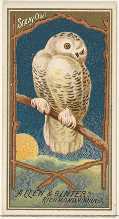Issued by Allen & Ginter (American). Snowy Owl, from the Birds of America series (N4) for Allen & Ginter Cigarettes Brands, 1888. The Metropolitan Museum of Art, New York. The Jefferson R. Burdick Collection, Gift of Jefferson R. Burdick (63.350.201.4.26)
