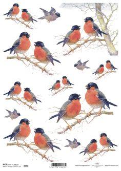 http://www.kreatywnyswiat.pl/pl/p/Papier-ryzowy,-Ptaki-Gil-zwyczajny,-A4-ITD-R590/6329
