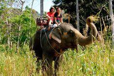 Visit an elephant sanctuary