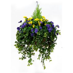 Latest Photo artificial Hanging Baskets Concepts Hanging baskets are the perfect way to create coloration as well as excitement into a warm divider and also ac. Winter Hanging Baskets, Artificial Hanging Baskets, Hanging Flower Baskets, Artificial Orchids, Artificial Flower Arrangements, Floral Arrangements, Outdoor Flowers, Outdoor Plants, Balcony Flowers