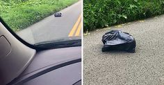 Mom Sees Lumpy Trash Bag On Way To Work, Rips It Open When It Starts To Walk Across The Road via LittleThings.com