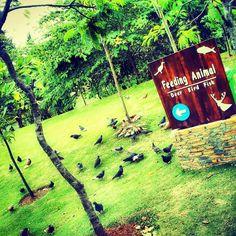 Population of birds. Animal #2