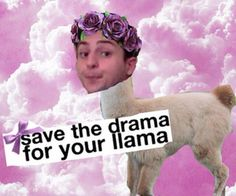 Save the drama for your llama-Twaimz
