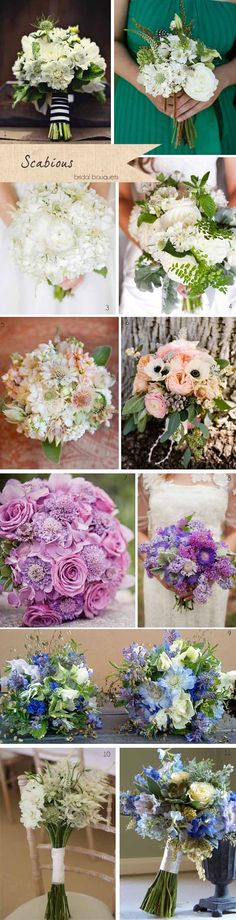 Scabious Wedding Flowers ~ Get To Know Your Wedding Flowers
