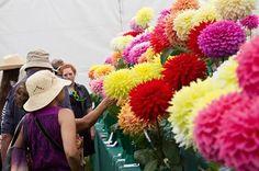 RHS Gardens Shows / RHS Gardening