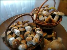 Collecting mushrooms is a very popular hobby in Czech Republic. During summer and early fall many locals can be seen with baskets in Bohemian forrests and restaurants often offer seasonal specialties made of hand collected forrest mushrooms