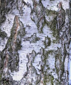 Birch bark--but doesn't it make you think of an old map of the Baltic?