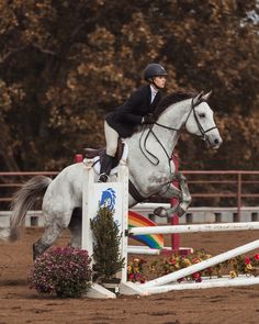 grey horse white horse jumping eventing show horse fall show - Best Equitation Horse Show Jumping Horses, Show Horses, Cute Horses, Beautiful Horses, Grey Horses, Foto Cowgirl, Hunter Jumper, Equestrian Outfits, Equestrian Style