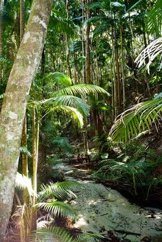 The part of our trip I'm most looking forward to. Fraser Island.