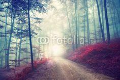 Vintage magische bosweg
