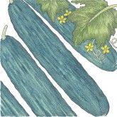 Organic Cucumber, Muncher