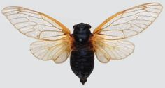 Cicadas are probably one of the few insects that mathematicians are obsessed with.