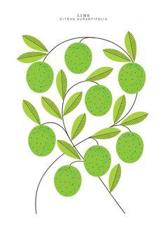 Lime - Sarah Abbott ----