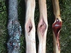 describes the 4 stages of the Diamond Willow wood. Hand Carved Walking Sticks, Wooden Walking Sticks, Walking Sticks And Canes, Walking Canes, Wood Sticks, Wood Projects, Woodworking Projects, Whittling Projects, Willow Sticks
