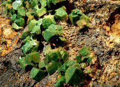 Euchroite, Cu2(AsO4)(OH)•3(H2O), on Limonite, Svätodušná deposit, Ľubietová, Banská Bystrica Co., Banská Bystrica Region, Slovakia. Fov 5 cm.  Absolutely perfect orthorhombic crystals of euchroite, clear, sharp, have an old green color and are on classic limonite matrix. Maximum size of crystals is 0,7 cm. Copyright © tomáš bancík