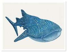 Detailed illustration of a whale shark