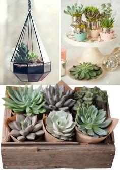 Succulent Terrarium - loving succulents right now!