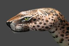 Hand-leopard
