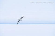 [PhotoScrap]: ベルベット